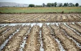 تشدید اقدامات مراقبتی برای جلوگیری از آبیاری سبزیجات با فاضلاب