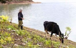 مسمومیتها در زاهدان به کشاورزی ربط ندارد