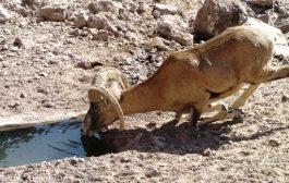 بحران آب، حیوانات را هم تهدید می کند