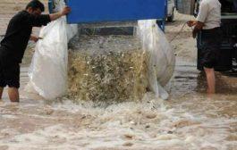 ۸۰ هزار قطعه بچه ماهی در آب های سد زاینده رود رها شد
