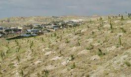 استقرار سیستم آبیاری قطرهای در ۱۰۰۰ هکتار از فضای سبز تبریز