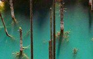 جنگل زیر آب نماد عجیب ترین دریاچه دنیاست که در قزاقستان واقع شده و درختان در این دریاچه به صورت وارونه درون آب قرار گرفته اند